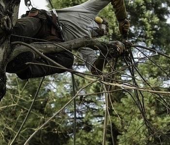 Virgin Forest SPRL - Elagage
